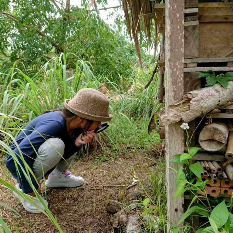 Farm Tour by Little Fields Pattaya