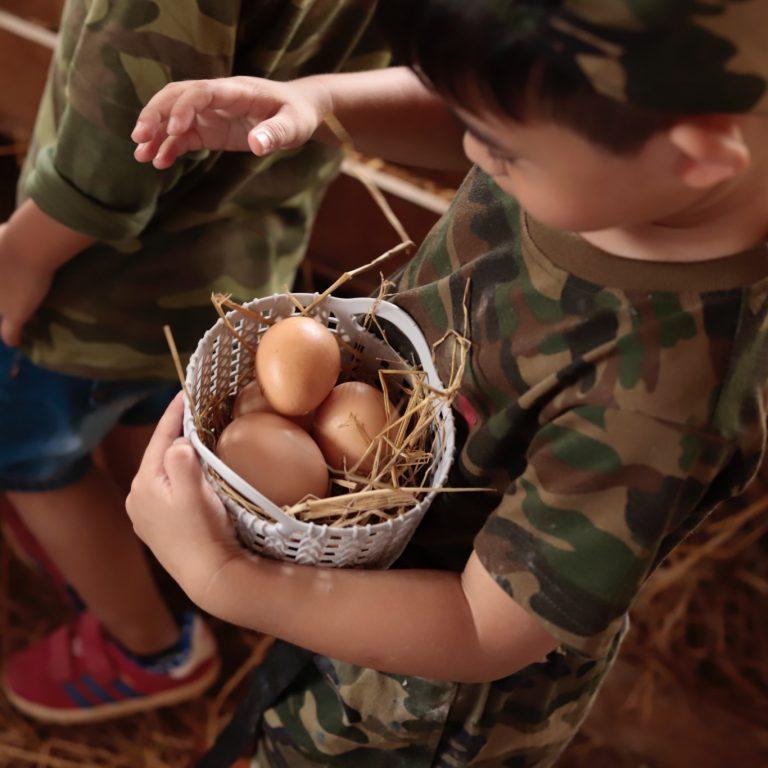 Chicken Coop & Workshop by Little Fields Pattaya